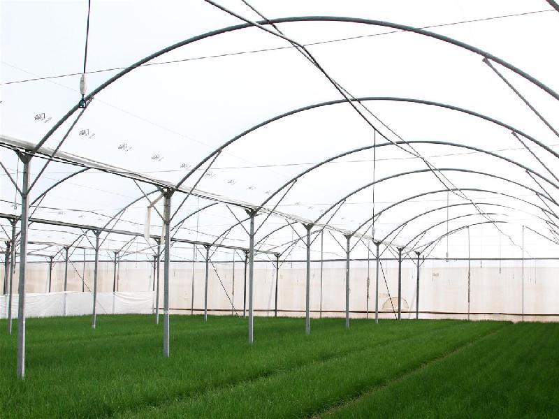 greenhouse mario